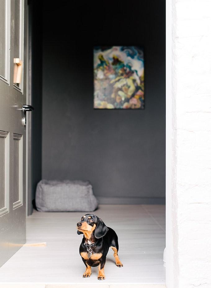 Dog standing in doorway