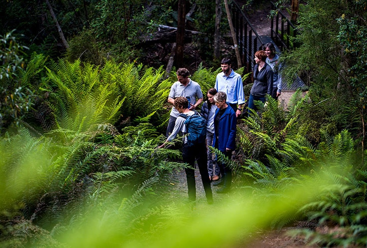 Small group walking through a fern glade outdoors