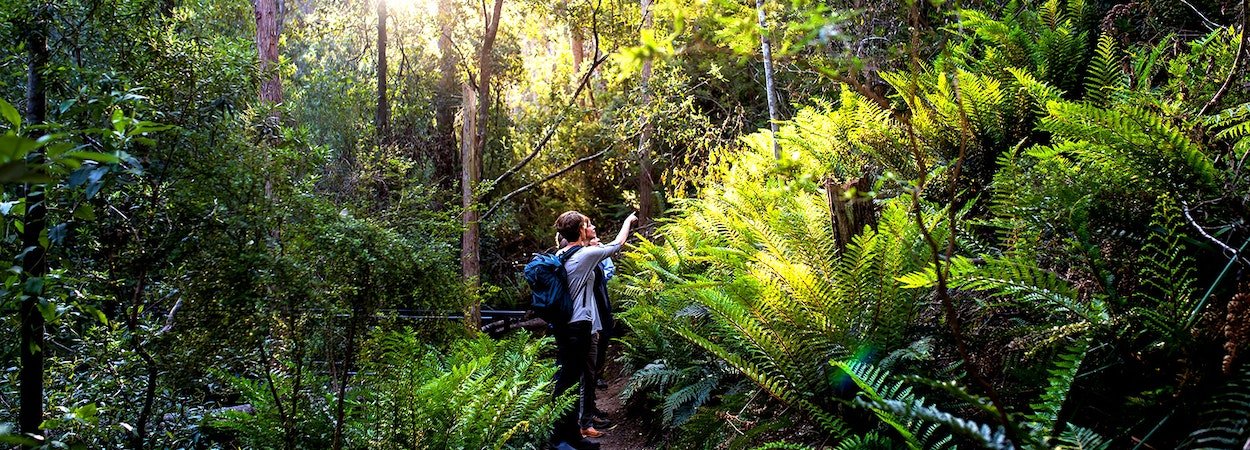 A group of bushwalkers admiring their surrounds in the middle of a dense forest