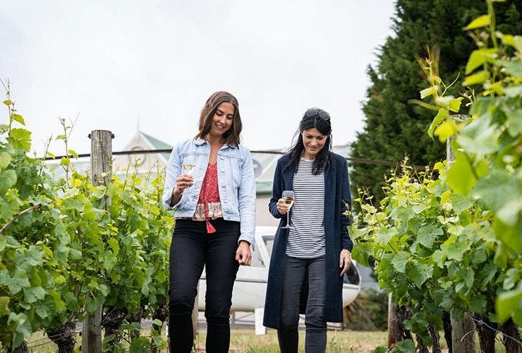 People walking through grape vines.