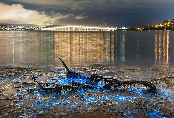Ocean bioluminescence.