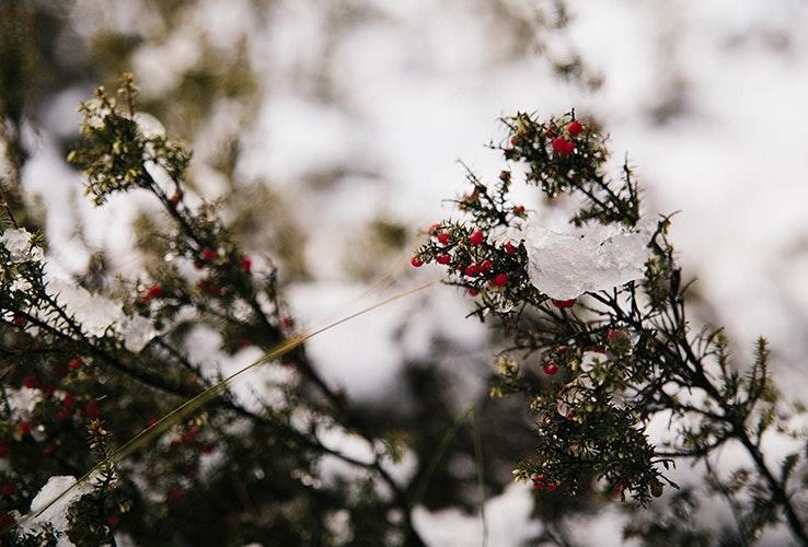Berries on Great Lake walk