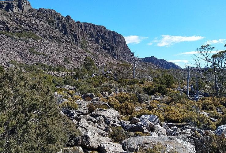 Bush mountainside.