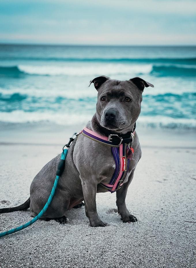 Dog on a beach.