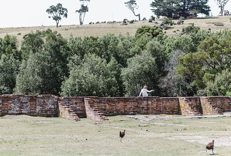 Chickens running in the wild as someone jumps a convict fence.