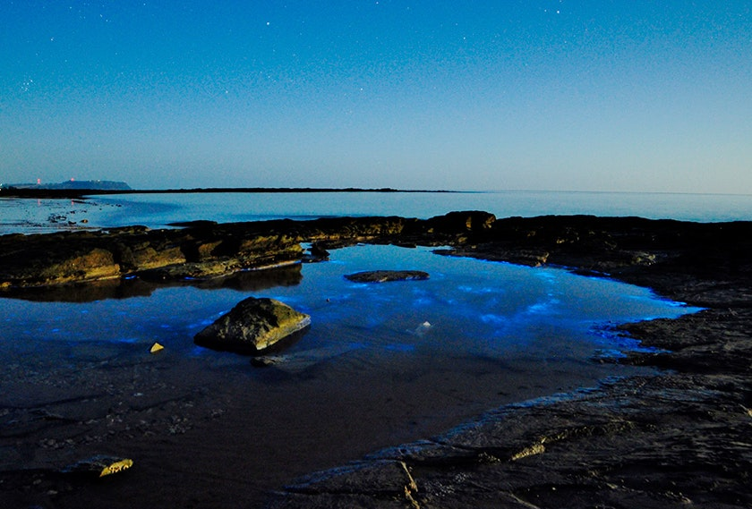 Bioluminescence at Somerse