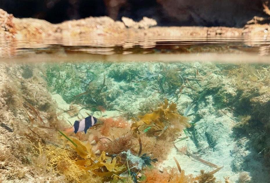 Underwater view of coral, seaweed and fish on Flinders Island