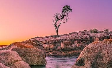 Purple sunrise.