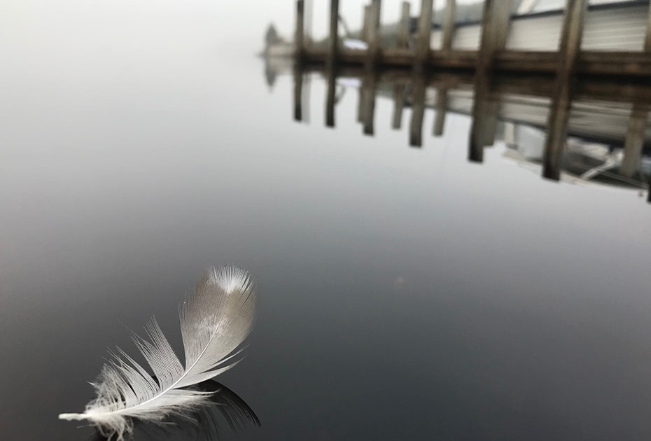 Feather floating on water.