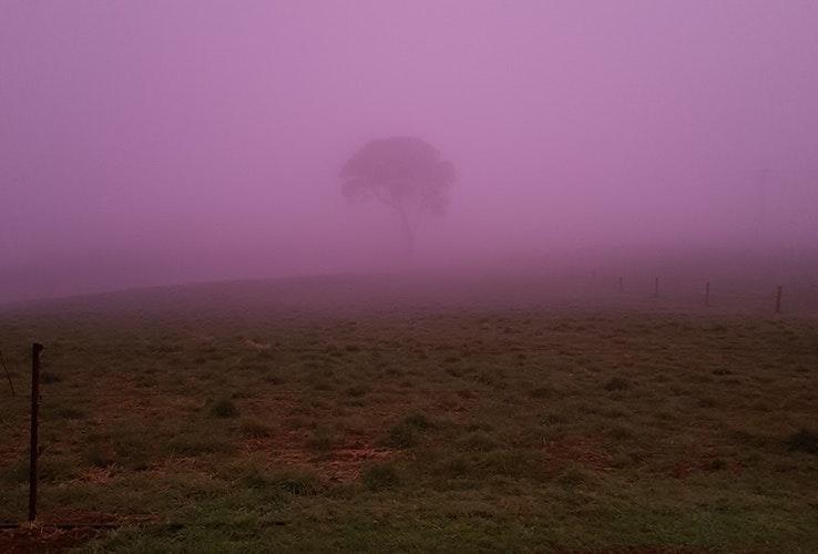 Pink fog.