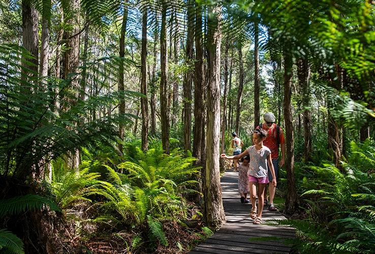 Walking amongst the rainforest