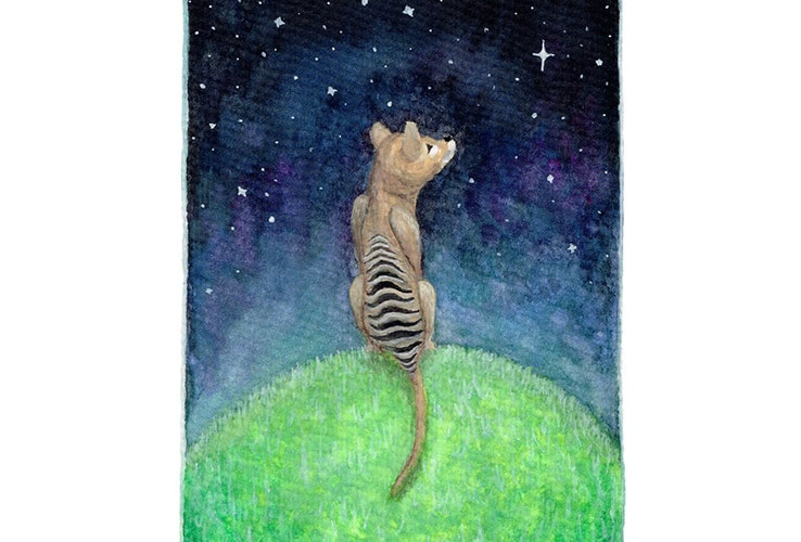 Thylacine artwork by Lucy Smith of Juicy Prints.