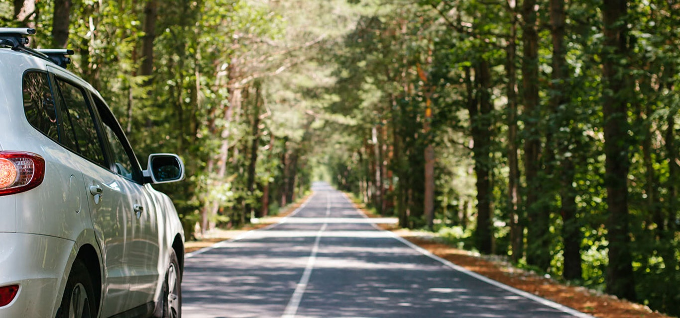 Car driving down a forest road.