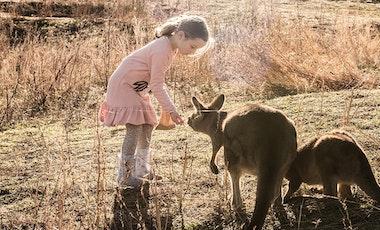 Child feeding kangaroo at Bonorong Park.