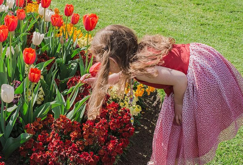 Little girl smelling the tulips at  the Royal Tasmanian Botanical Gardens