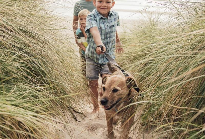 Family walking dog at the beach
