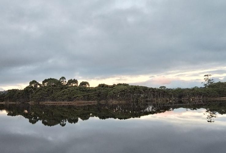 Dense bushland on the opposite side of a lake