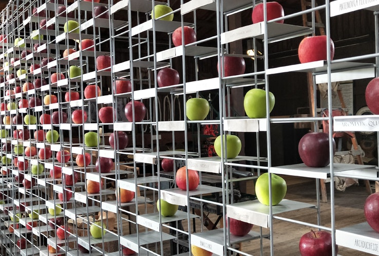 A wall of differing apple varieties