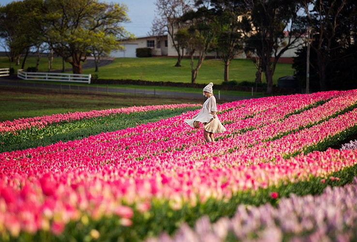 A young lady posing in a tulip farm