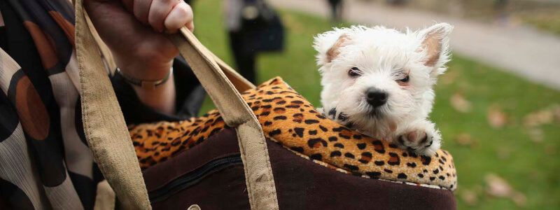 Hand Bag Dog