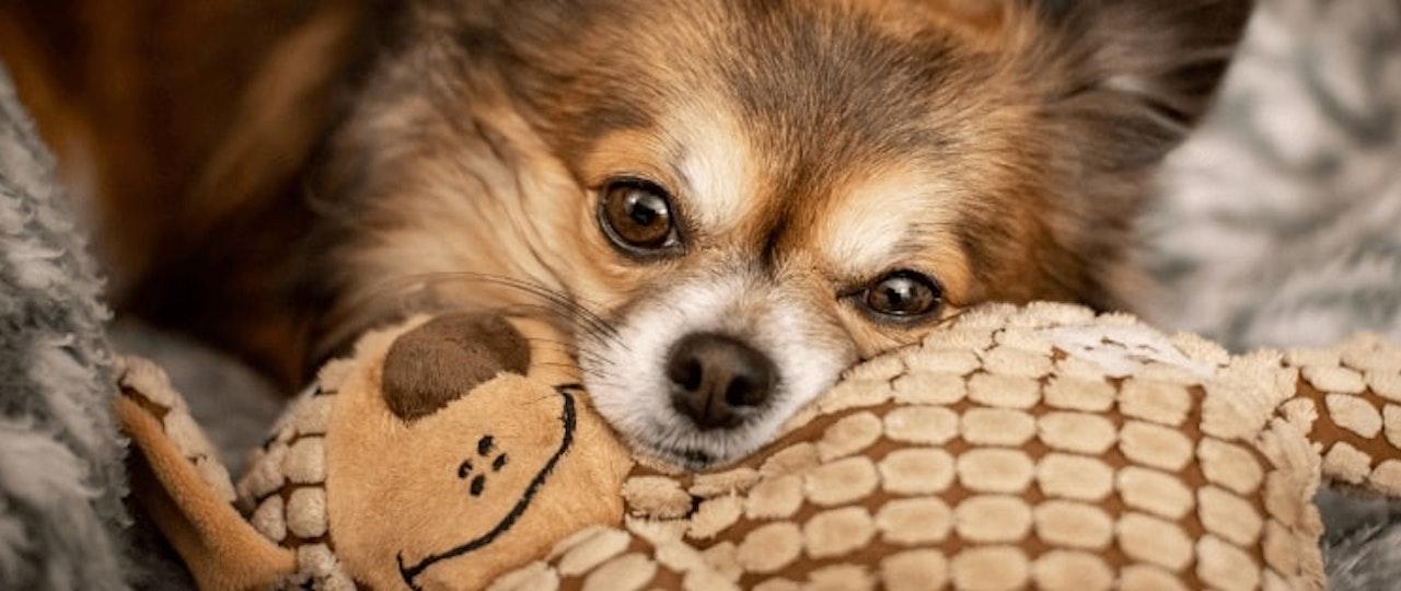 Pet Allergies in Rented Property