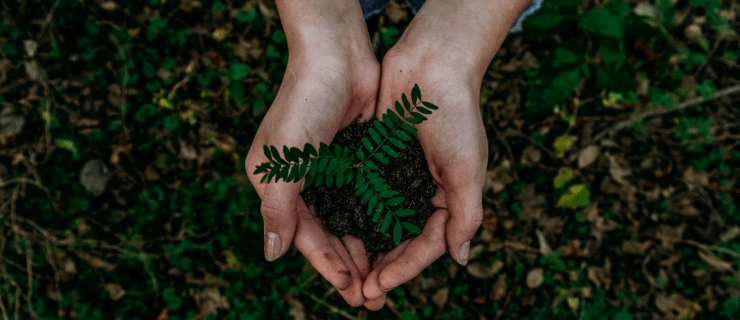 person-holding-plant