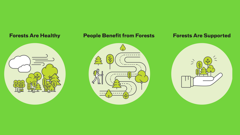 Forest Management Framework