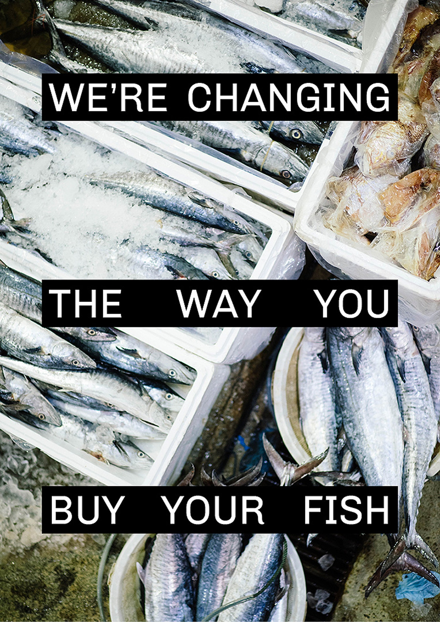 fish poster with white copy saying: we're changing the way you buy your fish