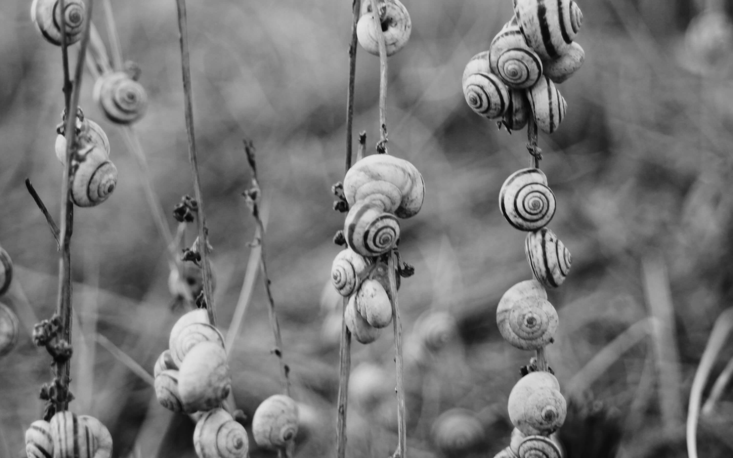 black and white image of snails on grass