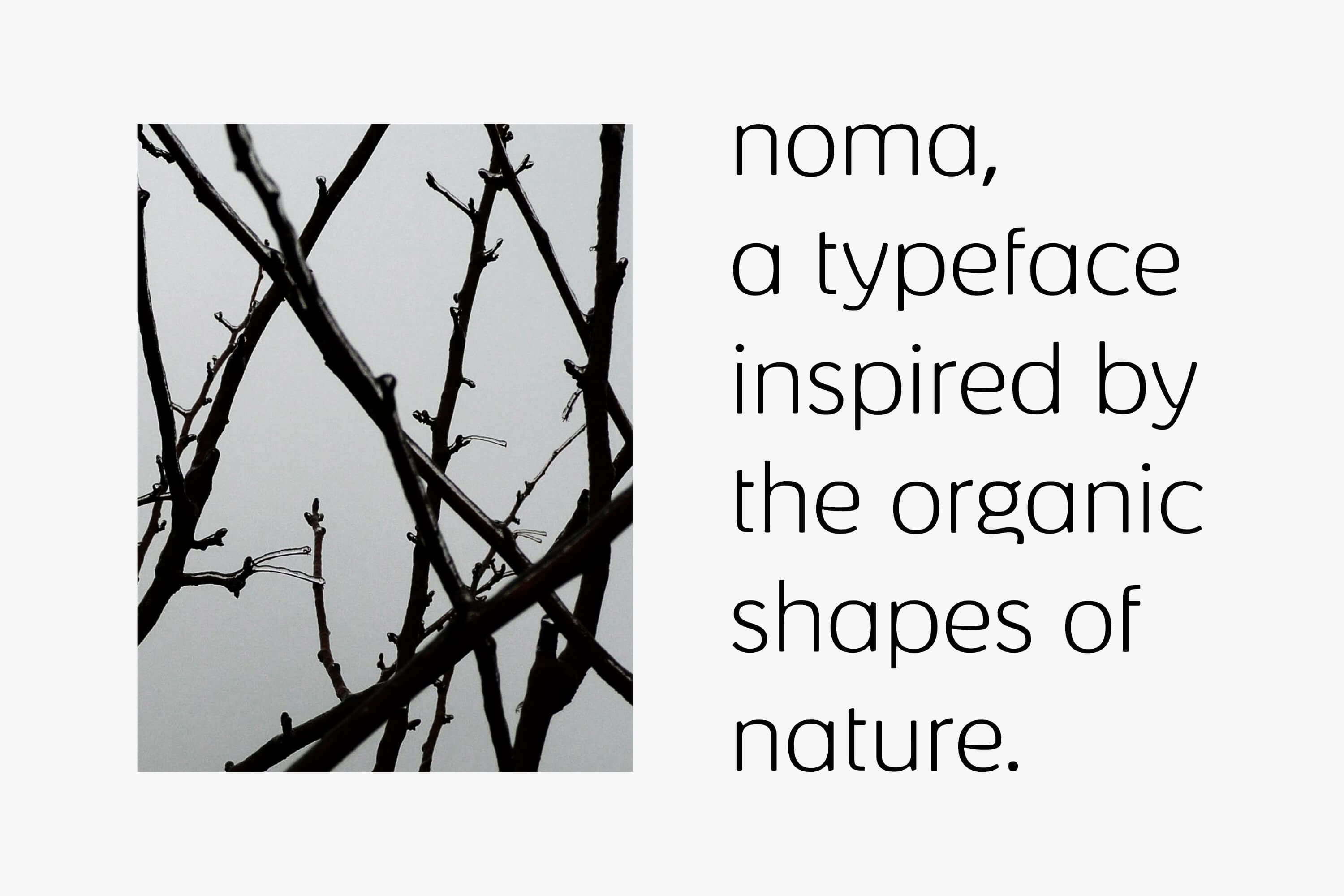 black and white image of tree branches and writing saying noma a typeface inspired by the organic shapes of nature