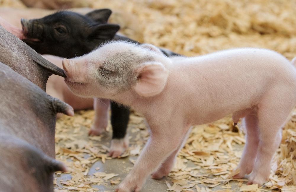 Animals - Washington State Fair