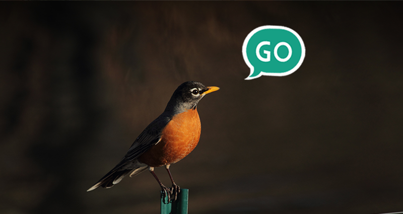 "email marketing - a bird with green speech bubble ""GO"""