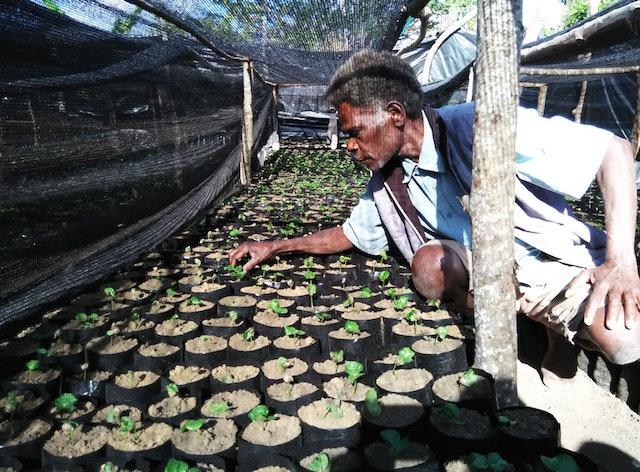 Iala Jacob, un agricultor local de café de la isla de Tanna, en el vivero recién construido.