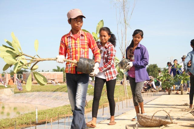 Youth volunteers carry frangipani plants.