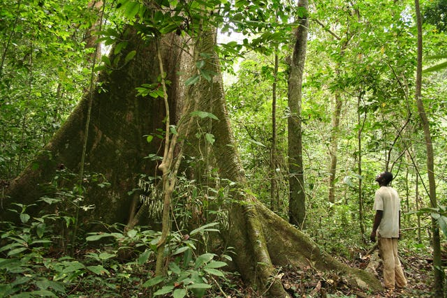 A rainforest in Gabon, the host country of the African Ministerial Conference on the Environment, which took place from 10–11 June 2017 in Libreville, the capital city (photo published on the UNEP website, copyright Alex Rouvin)
