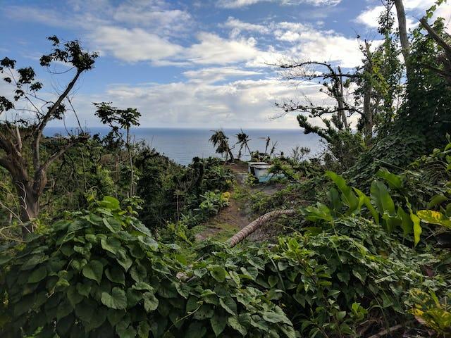 Territorio de Kalinago, Dominica, donde la comunidad aunó esfuerzos para construir invernaderos en los que pudieran germinar semillas para ayudar a restaurar los campos de cultivo que fueron diezmados por el huracán.