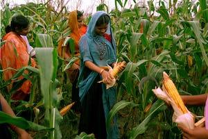 El artículo del Sr.Hanley analiza la importancia fundamental de la agricultura para el desarrollo humano. Esta foto muestra a las participantes aprendiendo sobre agricultura en el Instituto de Desarrollo Barli para Mujeres Rurales en Indore, India, una organización de desarrollo de inspiración bahá'í mencionada en el artículo.
