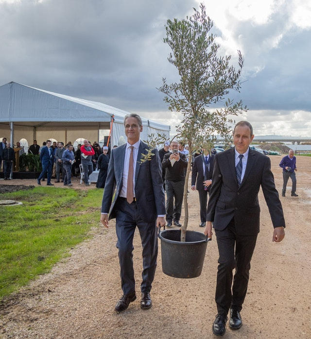 Shimon Lankri, Mayor of Akka, and David Rutstein, Secretary-General of the Baha'i International Community, carry an olive tree during a ceremony coinciding with the start of the construction of the Shrine of 'Abdu'l-Baha.