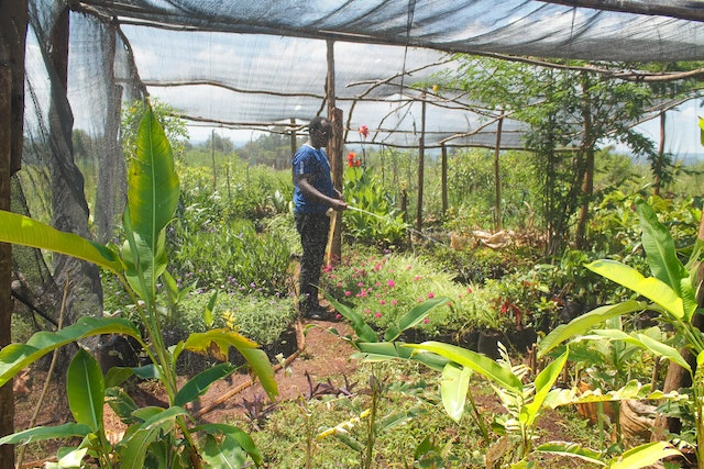 A growing number of residents in villages surrounding the site of the local Baha'i House of Worship in Matunda, Kenya, have been helping with various tasks, including tending an onsite plant nursery.