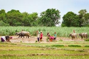 *Photo prise avant la crise sanitaire actuelle*. L'Assemblée spirituelle locale des bahá'ís de Motibasti, au Népal, examine ce qu'elle peut faire pour améliorer la capacité de la population à produire sa propre nourriture.