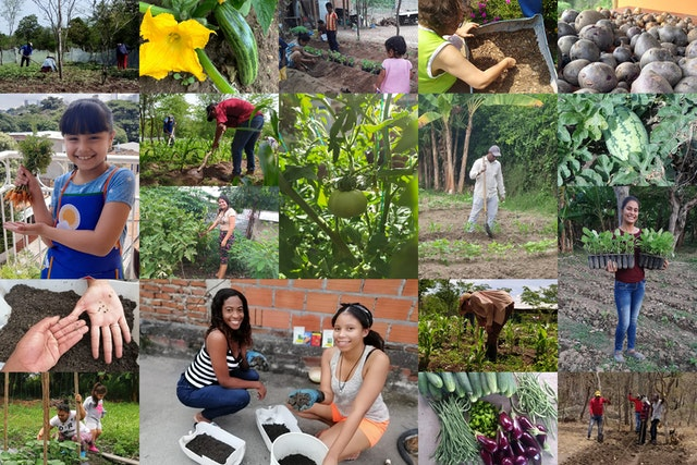FUNDAEC, a Bahá'í-inspired organization in Colombia, recognizing that the pandemic would have long-term ramifications, looked at how it could be of practical service to society at a time of dire need. Since March, it has assisted over 2,000 people across the country to become engaged in over 1,000 agricultural initiatives.