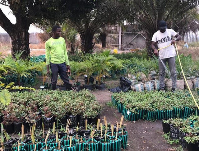 Volunteers from the local community around the temple site are helping in various tasks, including tending to a nursery for plants that will be used in the gardens.