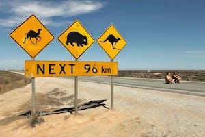 does australia or new zealand have the weirdest animals