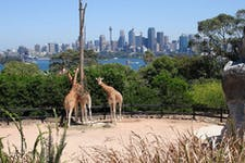 places to go in sydney taronga zoo