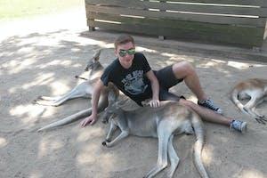 meet kangaroos in brisbane
