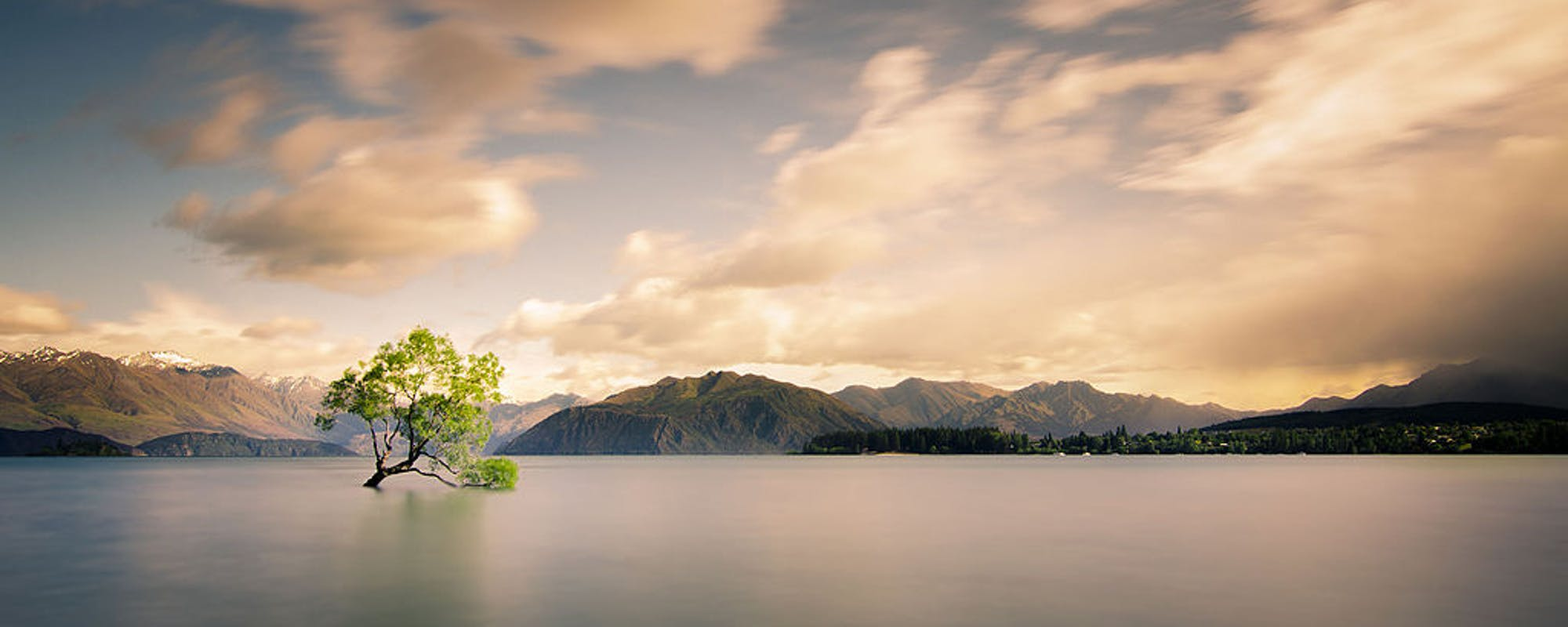 that wanaka tree new zealand