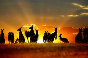 unique australian experiences