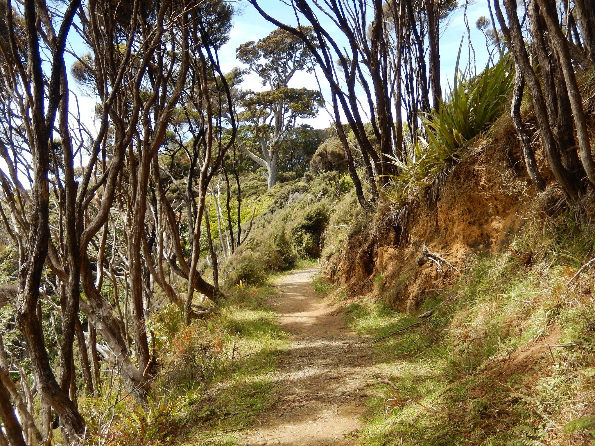 the rakiura track stewart island 9 great new zealand walks