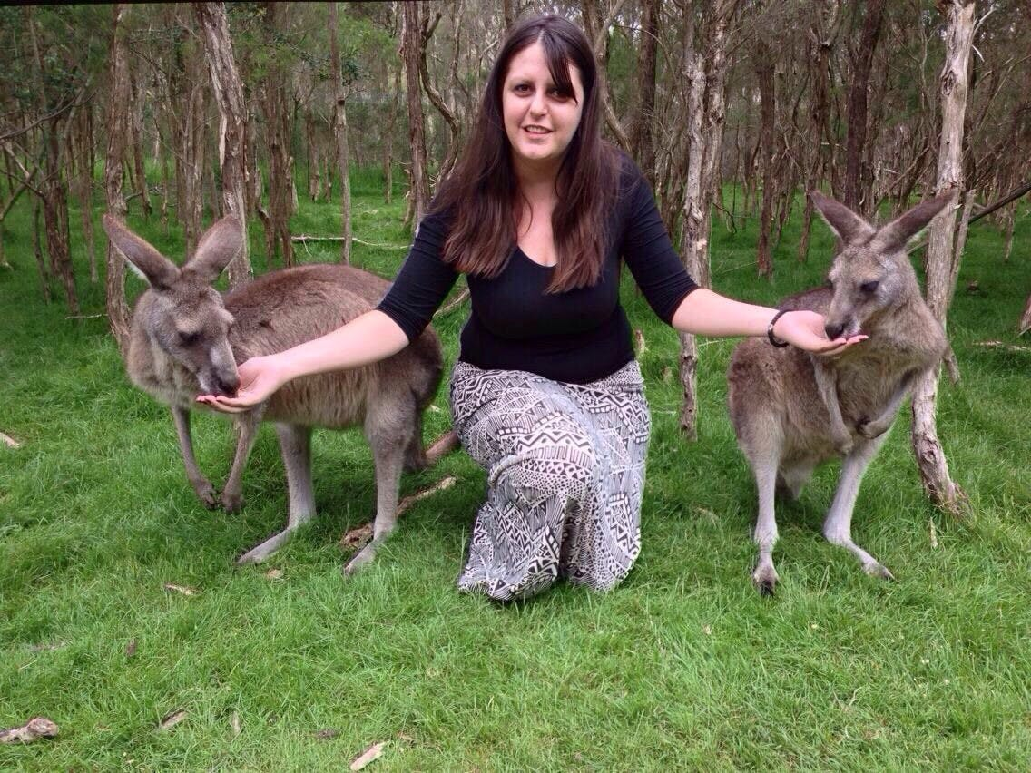 feed wallabies in melbourne