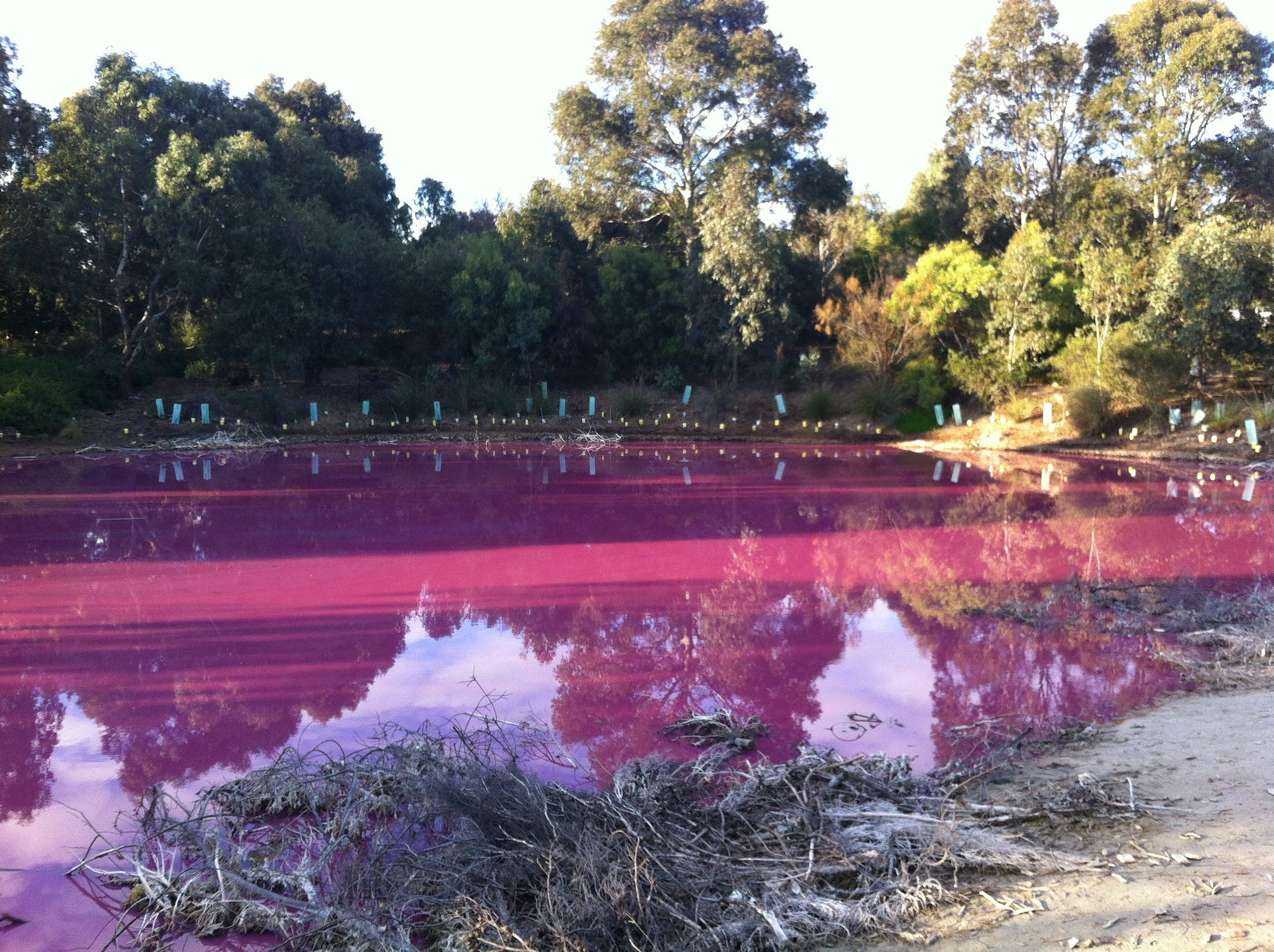 pink lake melbourne places in australia you've never heard of